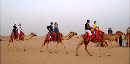 Camel Riding tours